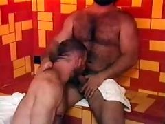 bears in sauna